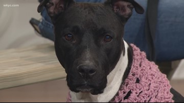 Pet of the Week: Meet Diana, who needs a foster