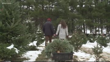 VERIFY: No, there isn't a Christmas tree shortage in Northeast Ohio