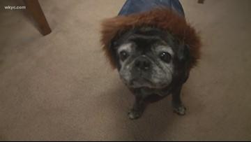 Cozy puppy ready for Ohio winter