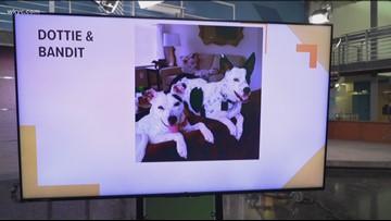 Doggone Weather: Dottie & Bandit