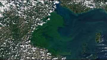 NASA photograph shows massive Lake Erie algae bloom