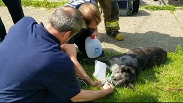 WATCH | Canton Fire Department rescues dog from burning home