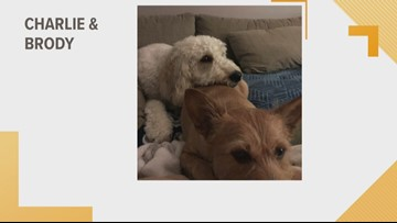 Doggone Weather: Charlie & Brody