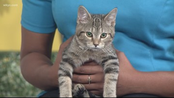 Adopt a Pet: Meet the kitten trio