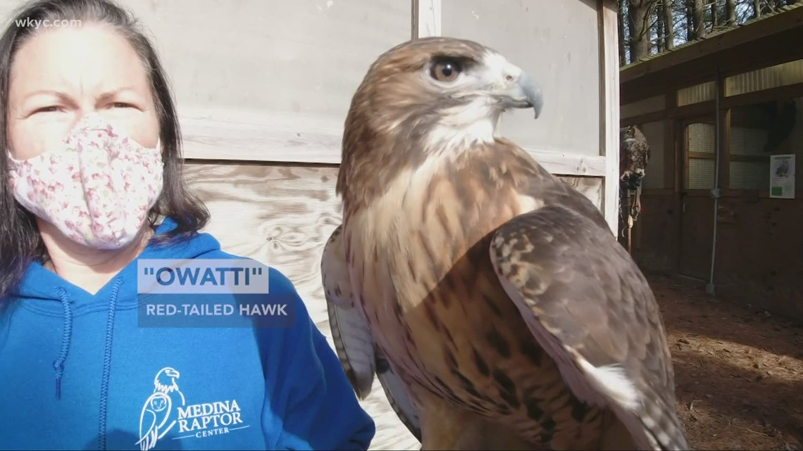 GO-HIO | Helping Ohio's birds of prey fly and hunt again: Exploring the Medina Raptor Center