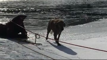 Fire crews rescue dog from icy waters at Geauga County resort campground