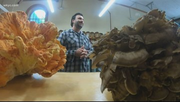 Local chef earns honors for his use of molds and mushrooms