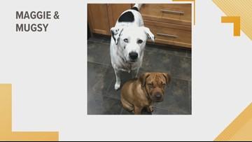 Doggone Weather: Maggie & Mugsy