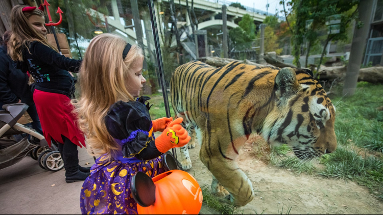 Trick-or-Treat Fest to return to Cleveland Metroparks Zoo starting Oct. 8
