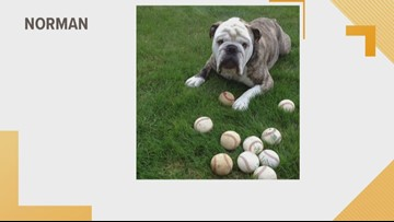Doggone Weather:  Norman
