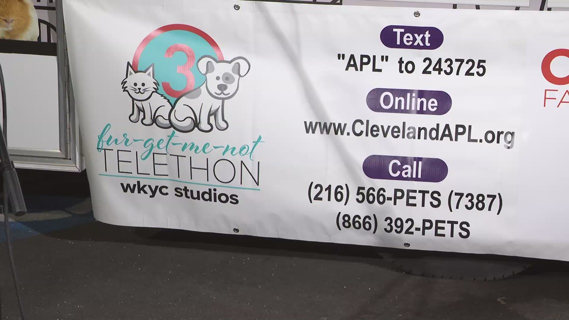 10th annual 3News' Fur-Get-Me-Not telethon: How you can donate to help the Cleveland APL
