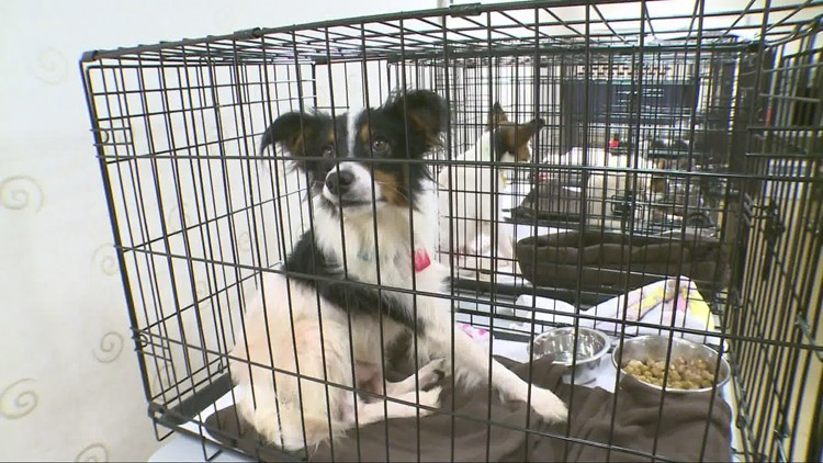 Clear The Shelters Ending Tomorrow.