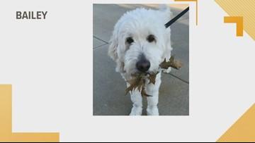 Doggone Weather: Bailey