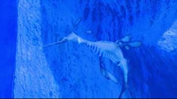 Cleveland Aquarium reveals upgrades: Rare 'weedy sea dragons' among new species on display