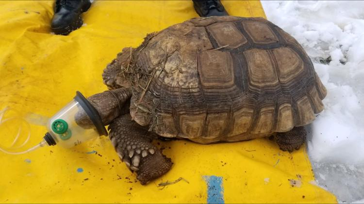 Multiple turtles killed in Medina shed fire