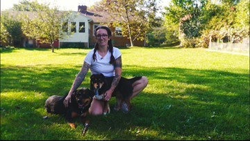 Hardworking Cleveland | Cleveland Dog Walk services Northeast Ohio one paw at a time