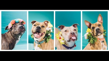 More than 100 dogs up for adoption at full Cleveland city kennel