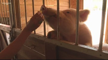 Unique pets up for adoption at Rescue Village in Geauga County