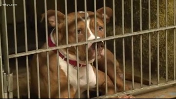 Clear the Shelters: Inside the new City of Cleveland Kennel