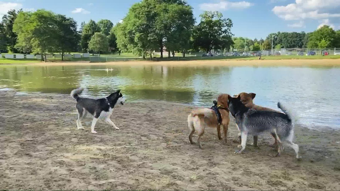 Why Bow Wow Beach in Stow is one of the best dog parks in Ohio