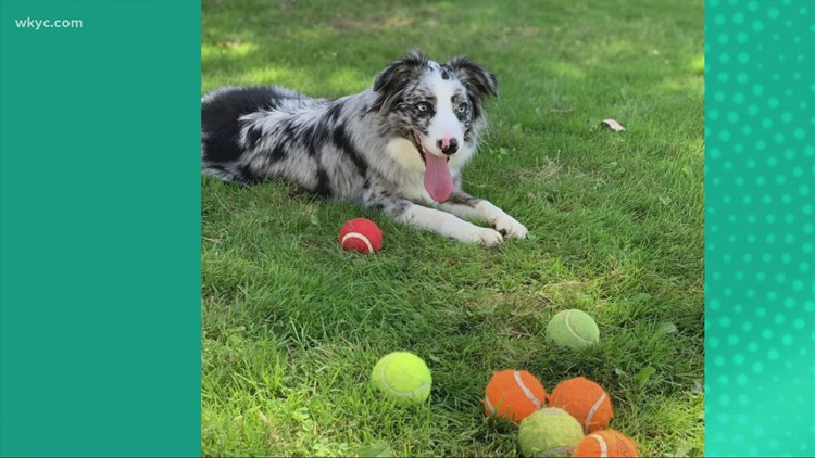 Doggone Weather:  Daisy