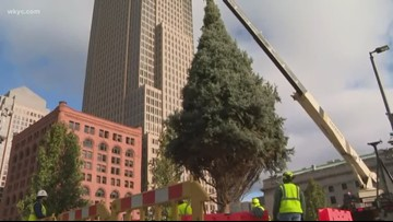 Cleveland's Christmas tree installed in Public Square