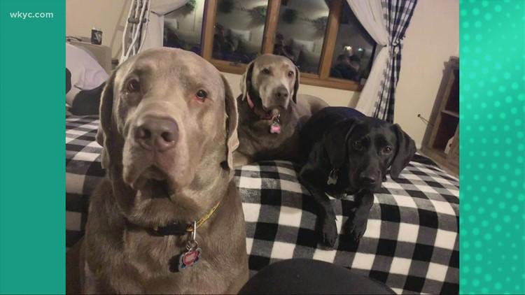 Doggone Weather:  Vader, Peep & Miss Bailey