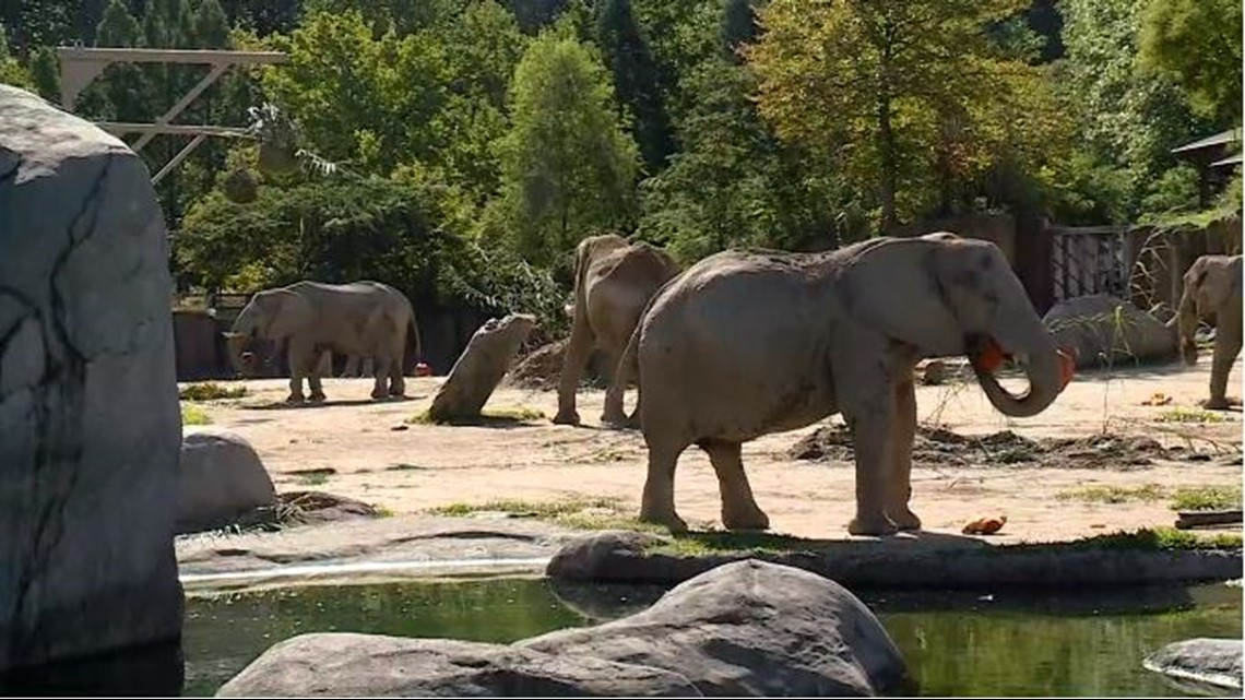 Akron Gas Prices >> Cleveland Zoo previews 'Boo at the Zoo' event   wkyc.com