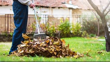 Verify: To rake or not to rake?