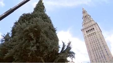Christmas arrives in Cleveland: Public Square's Christmas tree installed
