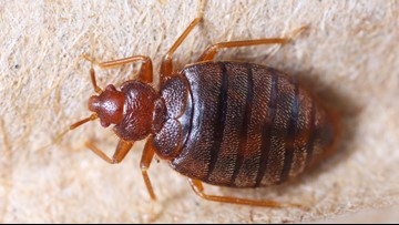 Cleveland ranked America's most bed bug-infested city