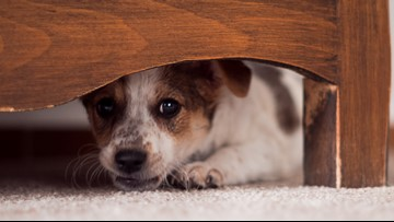 How to keep your pet calm during fireworks