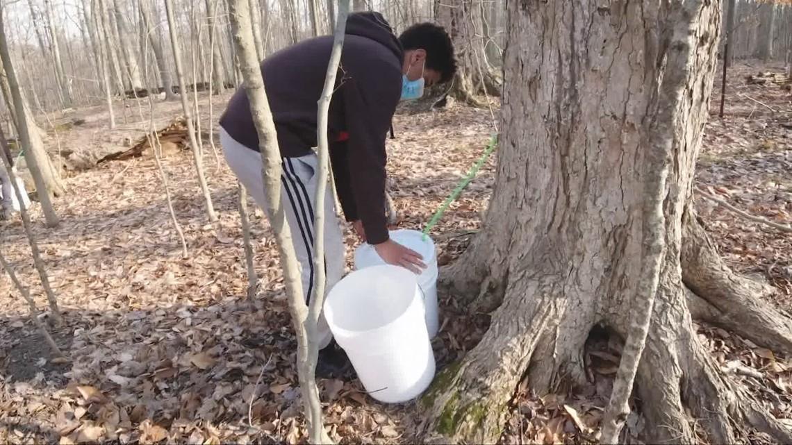 How maple syrup is made in Ohio: GO-HIO adventures with 3News' Matt Standridge