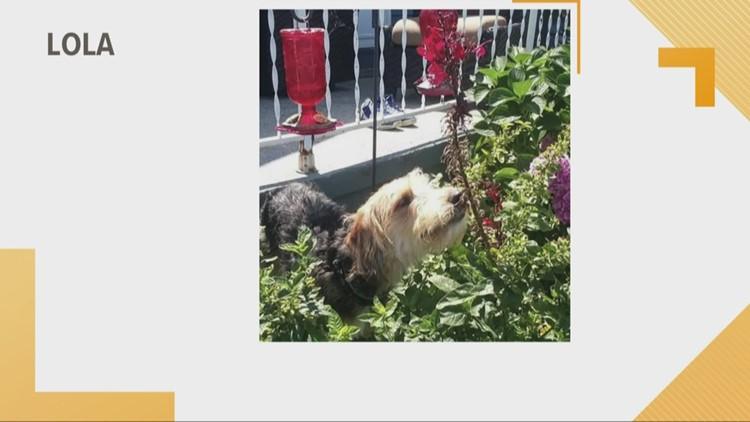 Doggone Weather: Lola