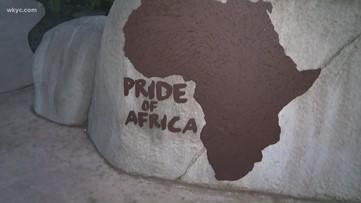 Sneak peek inside the Akron Zoo's new Pride of Africa exhibit