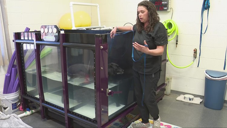 Water therapy used to help heal dogs