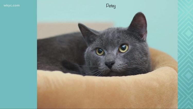 Adopt-A-Pet: Meet Cherry, Kitty, & Petey.
