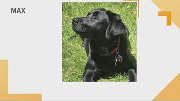 Doggone Weather:  Max