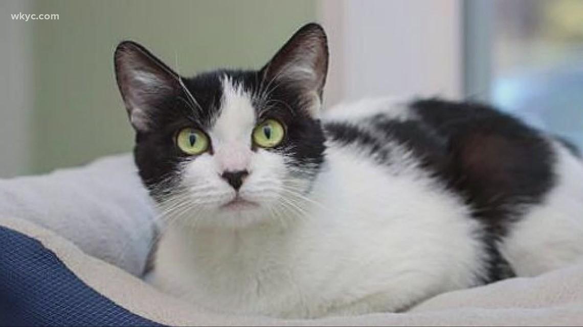 Adopt-A-pet: Meet Moomoo, Claudette, & Irina.