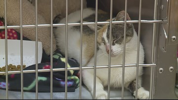 Seven cats dumped in garbage can outside Warrensville Heights animal hospital
