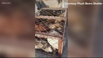Local group saves dogs from Chinese slaughter house