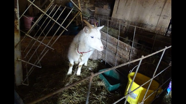 12 neglected animals rescued from dark, cramped barn in Trumbull County