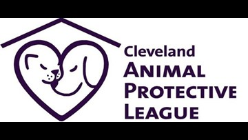 More than 100 cats removed from home on Cleveland's east side