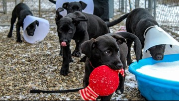 WATCH | Check out these cute puppies on National Pet Day
