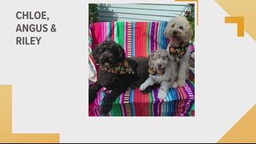 Doggone Weather:  Chloe, Angus & Riley