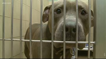 Parma pit bull ban officially upheld by narrow margin following recount