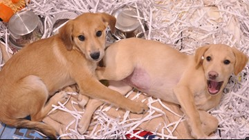 Local shelter in need of shredded paper for puppies
