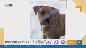 Doggone Weather: Odie