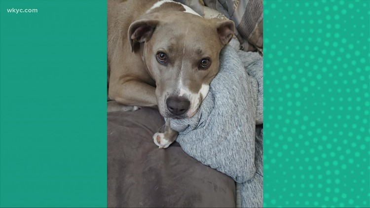 Doggone Weather:  Sasha