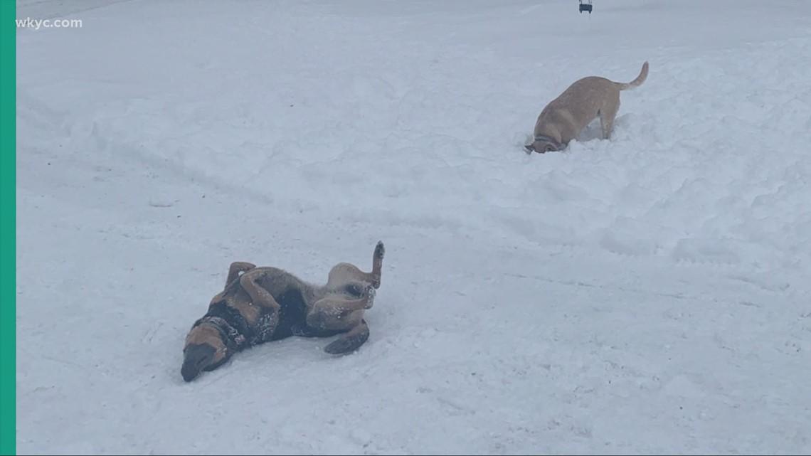 Doggone Weather: Alice & Stella.